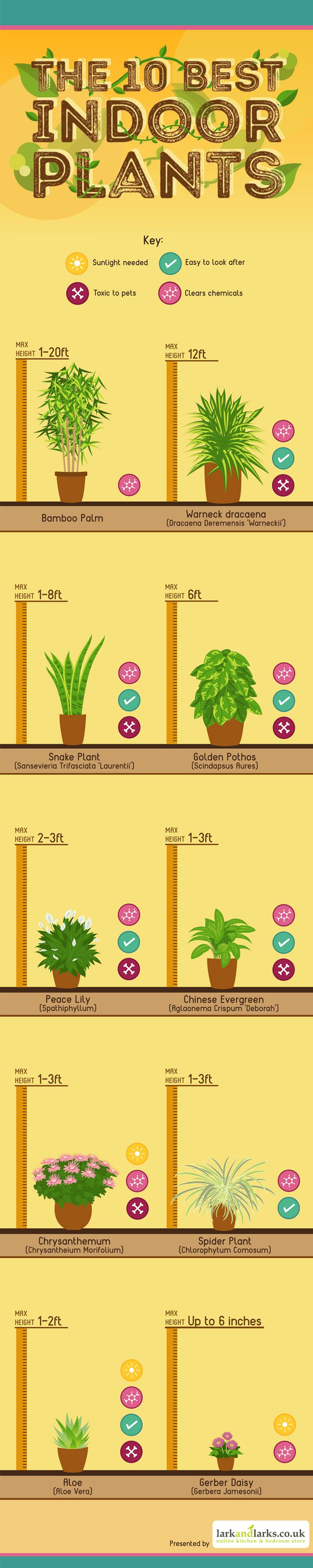 10 best indoor plants infographic
