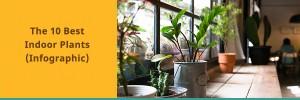 10 of the best indoor plants