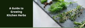 Guide to growing kitchen herbs