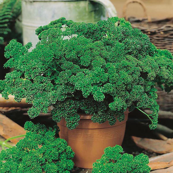 herbs to grow in your kitchen