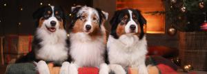 Barks for Larks Christmas Competiton