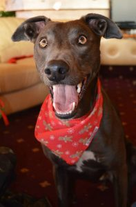 Barks for Larks Christmas Competition Winner