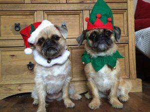 Mrs Santa and Grumpy Elf dogs