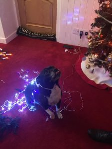 Christmas staffie