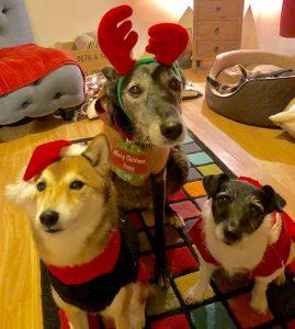 Barks for Larks Christmas Competition