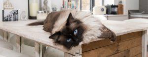 Cat on kitchen work surface