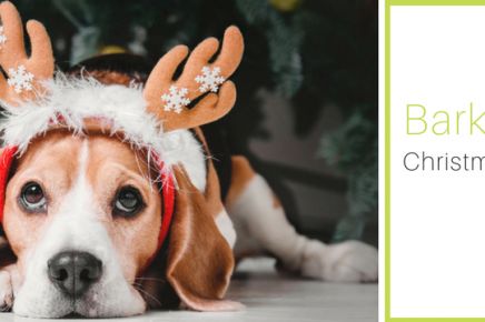 Barks for Larks – Enter our Christmas Competition!
